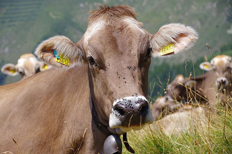 Valle Brembana - Agriturismo Trapletti
