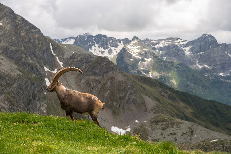 Valtellina - Agriturismo Trapletti